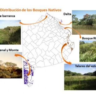 «Se habla de una cancha de fútbol por hora de pérdida de bosque nativo en todo el territorio»