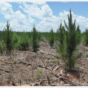"""""""Las multinacionales plantan un verde artificial, que es para ser talado"""""""