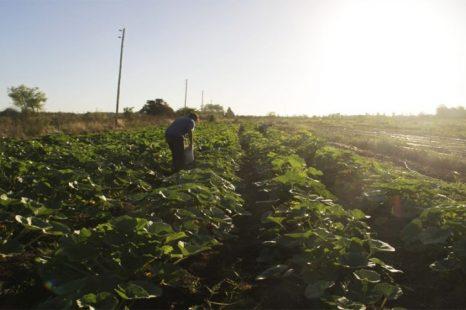 «El campo no es el que produce y exporta, sino quienes lo trabajamos».