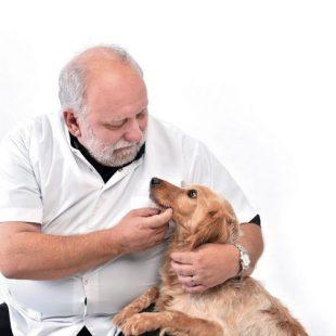 DÍA DEL ANIMAL:  «Cuando el aislamiento termine, el animal va a sufrir desapego»