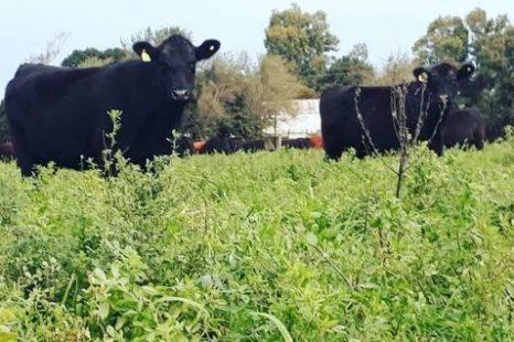«Hay una transición del agronegocio a la agroecología»