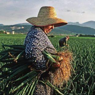 «El 43% de la fuerza laboral agrícola, la realizan las mujeres»