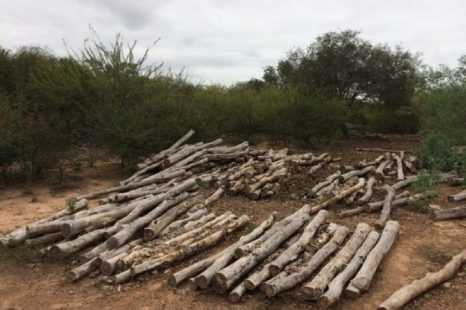 Avanzó el desmonte de Tartagal y las comunidades Wichi denunciaron amenazas