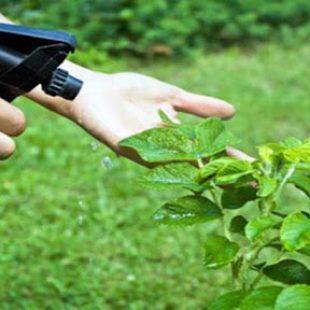 Crean un insecticida que no perjudica al medio ambiente