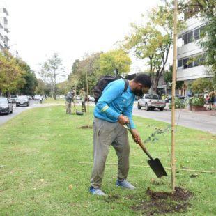 La Municipalidad de La Plata plantó lapachos rosados en avenida 19