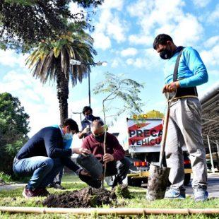 En la terminal de micros plantaron árboles e instalaron eco-ceniceros