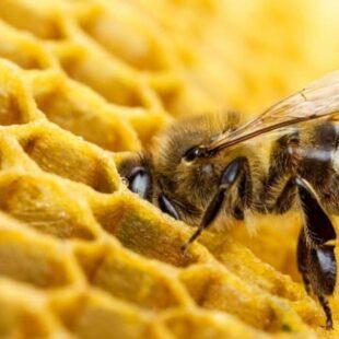 """""""Hay una disminución de colmenas y abejas en el mundo por el uso de agrotóxicos"""""""